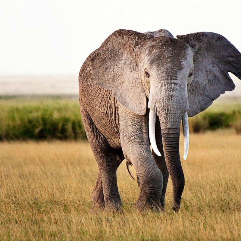 01-how-to-photograph-an-african-safari-2012-12-30