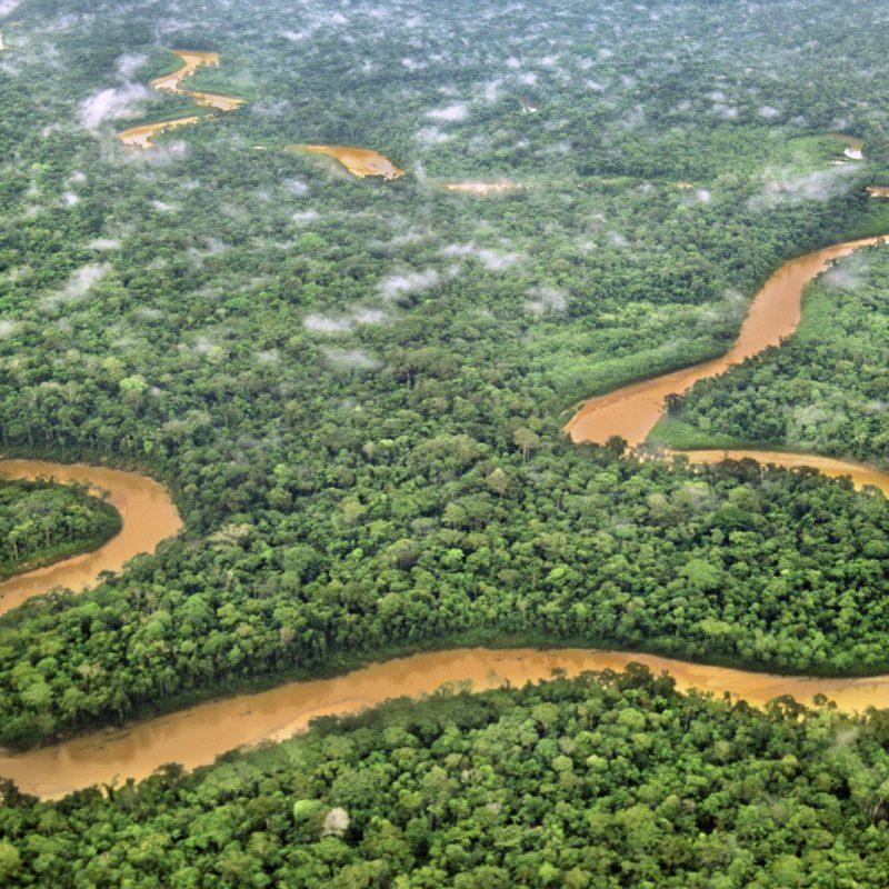 DeforestationFreeCocoa_Icon