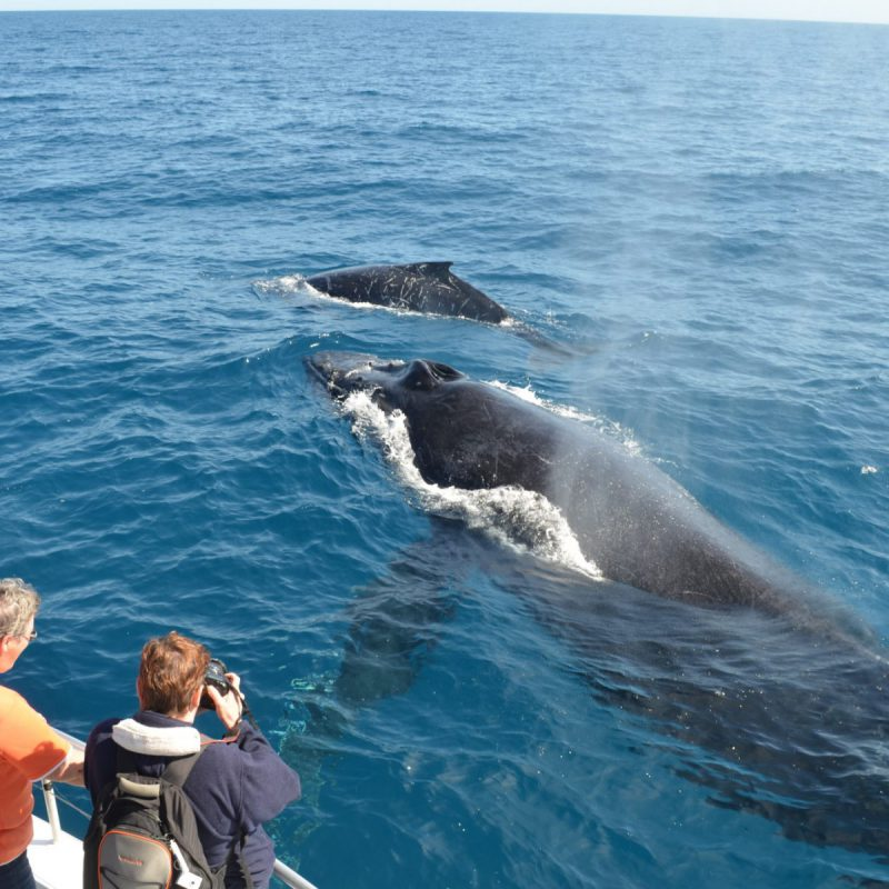 Kayak-Whale-Watching-In-Rosarito-Beach-Mexico