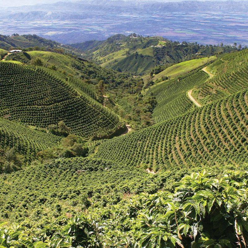 Kofejnaya-zona-v-Kolumbii