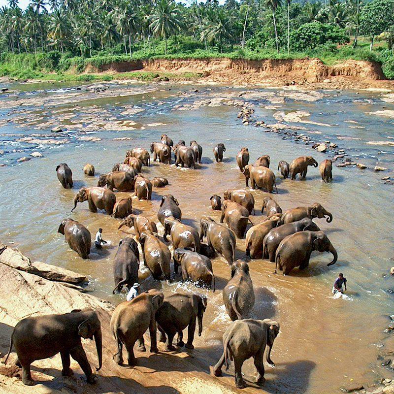 Sri_Lanka_Tourism4
