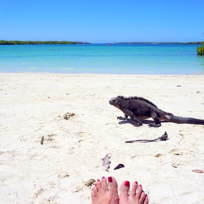 Tortuga-Bay-Galapagos-marine-iguana