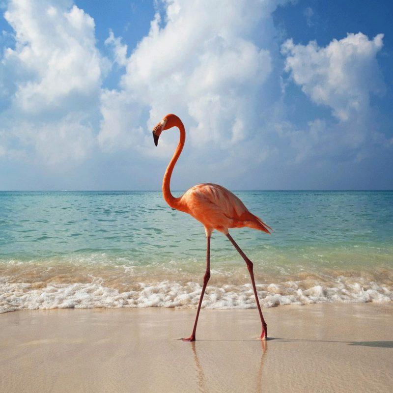 Vacanta-Galapagos-si-Ecuador