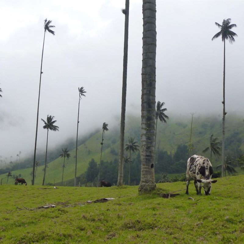 cocora_valley_colombia_20120522_105