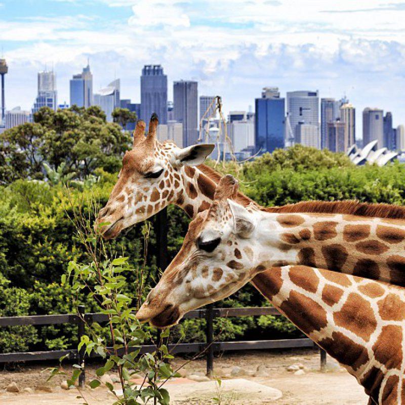 dubai_safari_park