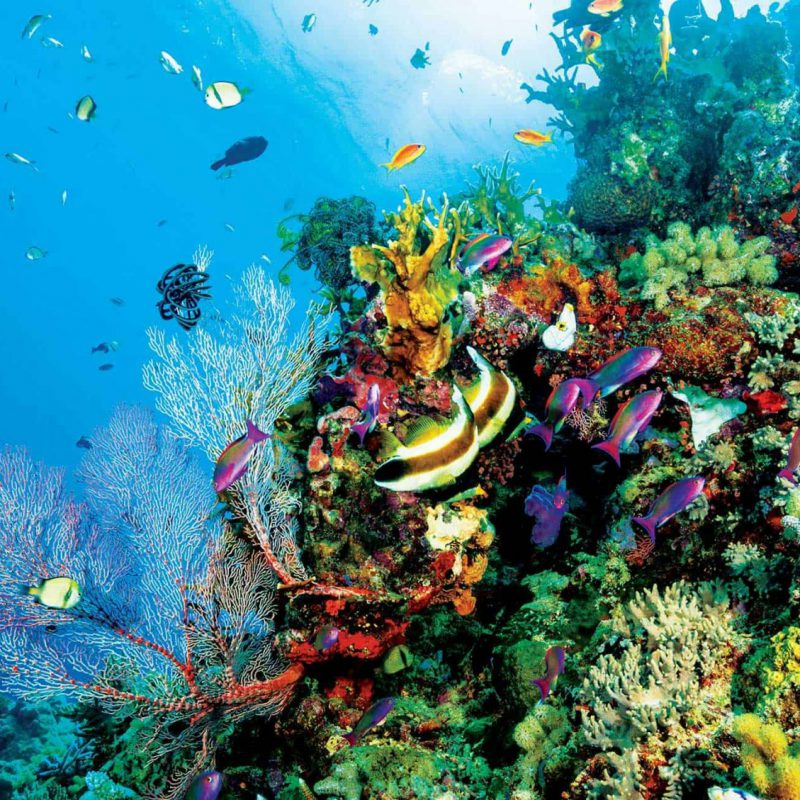 great-barrier-reef-facts