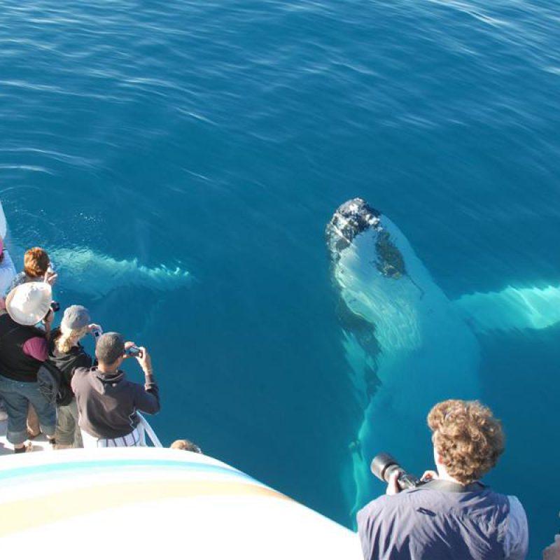 киты-в-доминикане