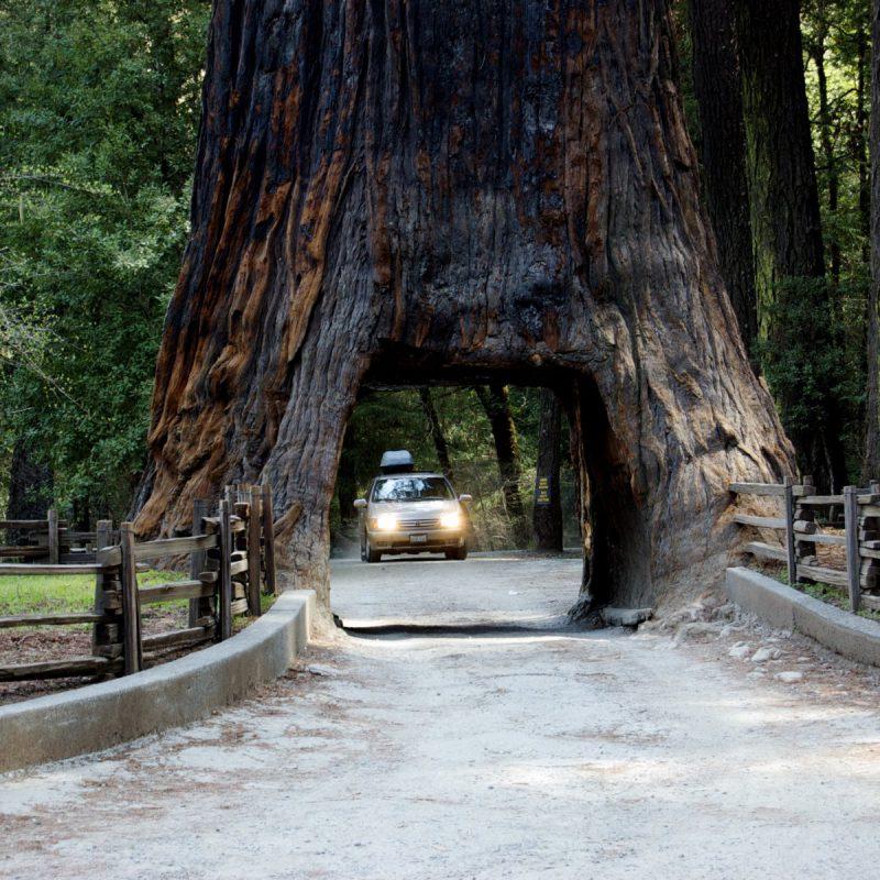 redwood-natl-park