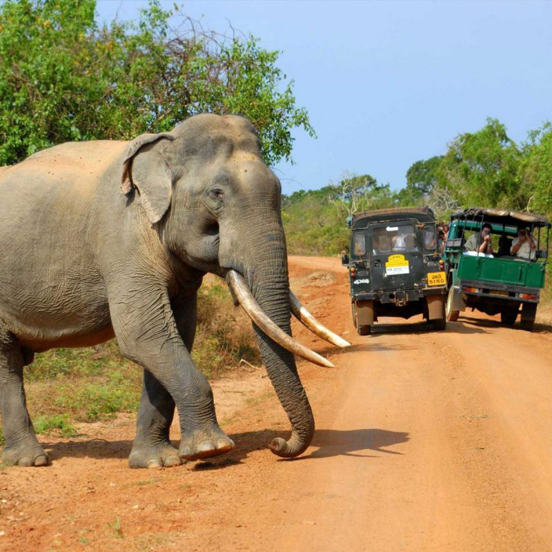 udawalawa-safari